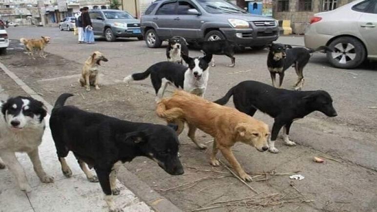 """""""الداخلية"""" ترصد 4,2 مليار سنتيم لجمع الكلاب الضالة وشراء لقاح """"السعار"""" خلال 2020"""