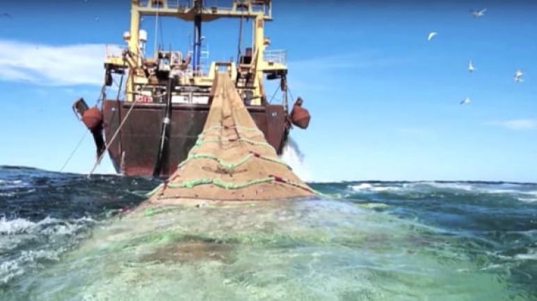 صدور قرار وزاري يمنع السفن من استعمال شبكة العمق في بعض سواحل المتوسطي+(الوثائق)