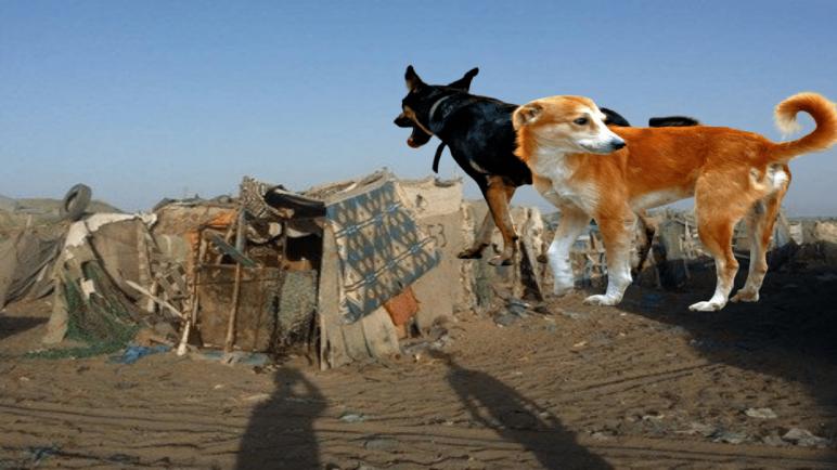 """""""الكلاب الضالة"""" تنهي حياة متشرد بقرية الصيد لاساركا"""