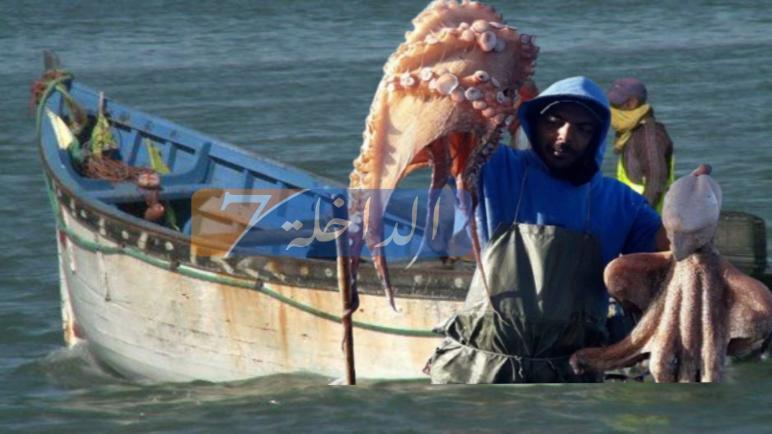 """رسميا.. وزارة الصيد البحري تحدد فترة نهاية موسم صيد """"الأخطبوط"""" لـموسم خريف 2020"""