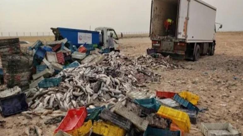 تفاصيل..إتلاف 15 طن ديال الحوت تحجزات فالداخلة وغادية للتهريب