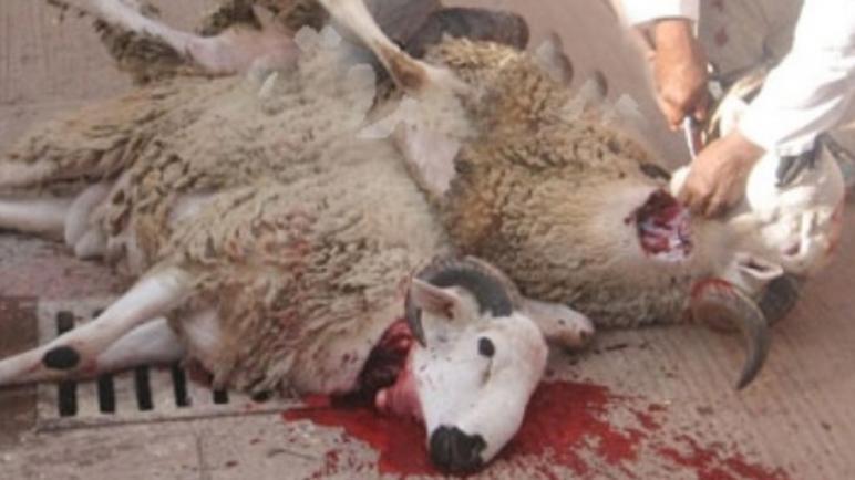 وزارة الأوقاف تعلن عن توقيت ذبح أضاحي العيد