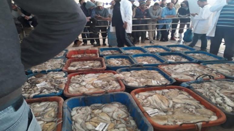وزارة الصيد البحري تحدد كمية الأخطبوط المسموح بصيدها بالنسبة لقوارب الصيد التقليدي خلال فترة الموسم الصيفي 2021