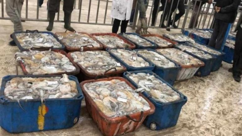 إعلان عن تأسيس تنسيقية تجار السمك الصحراويين بالجملة والتقسيط بجهة الداخلة وادي الذهب
